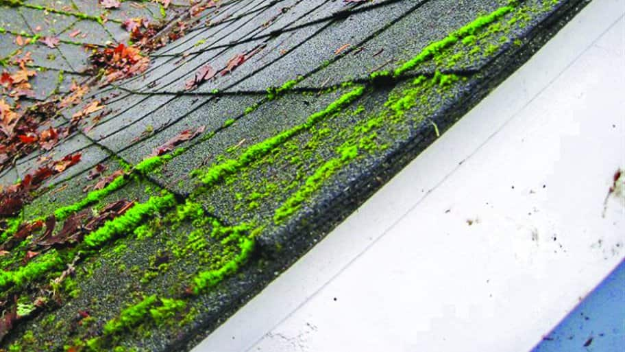 Moss On Asphalt Shingle Roof