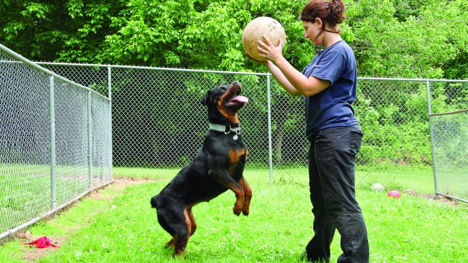 woman plays with rottweiler