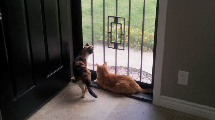 metal screen security door with cats looking outside
