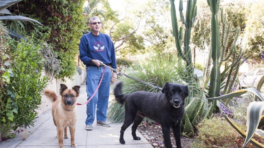 senior dogs on walk