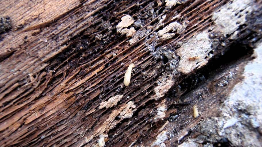 how long does it take termite treatment to work
