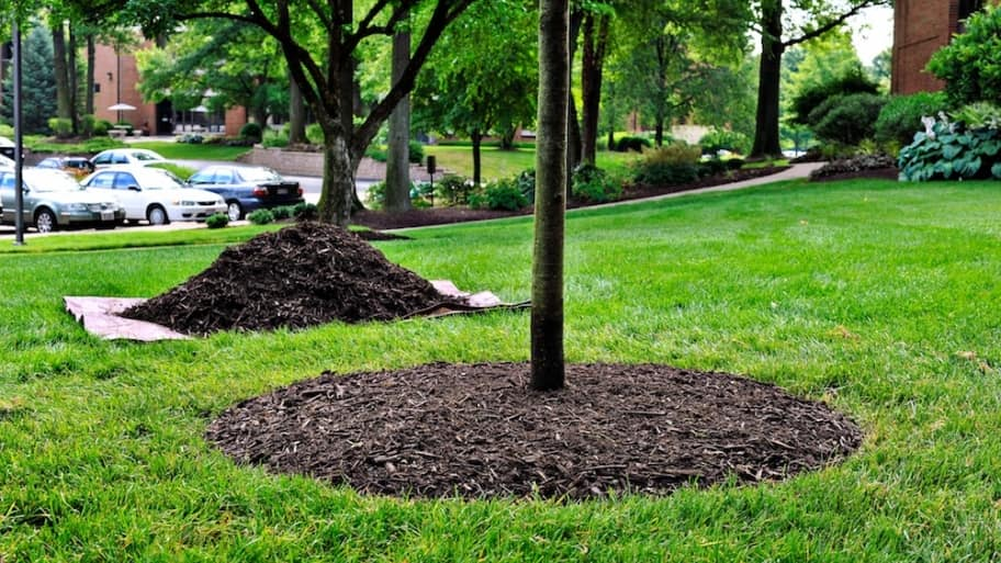 Dark Mulch option for your tree
