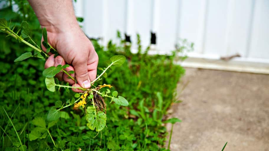 7 DIY Ways To Control, Kill Weeds In Your Yard