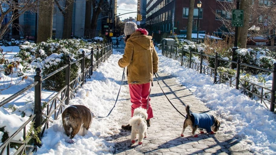 A person walking three dogs in the snow