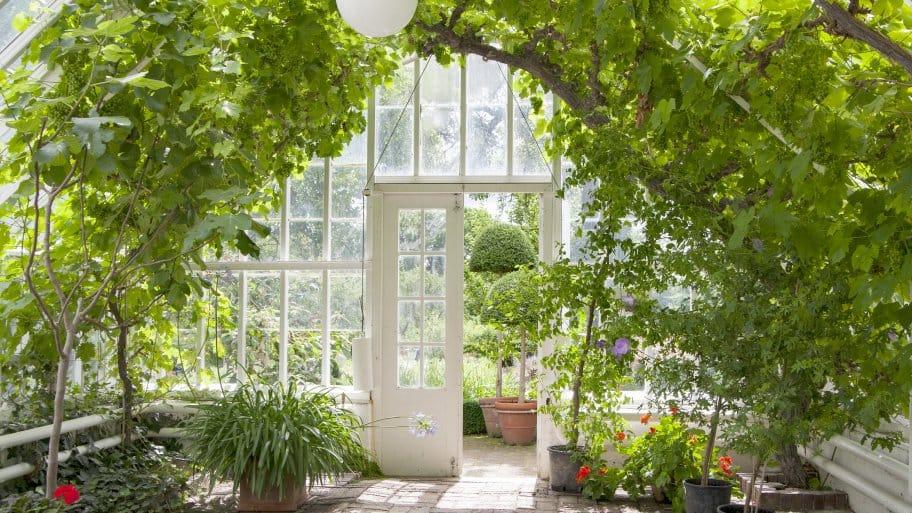 Add vining plants to a greenhouse. (Photo courtesy of Daniel-Hjalmarson)