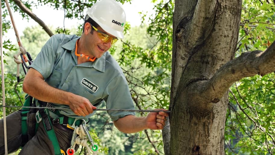 man installing cable in tree