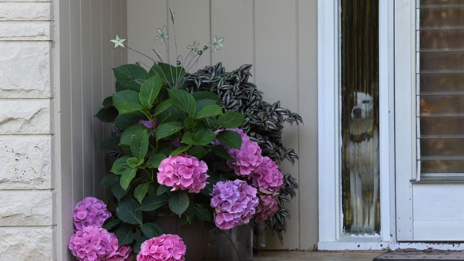 Consider Installing A Pet Door In The Wall Angies List
