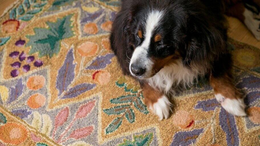 dog sitting on rug