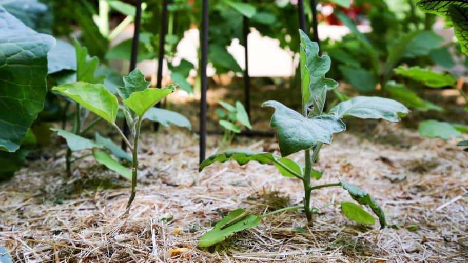 fertilizing basics for the yard and garden soil  angie's list, Natural flower