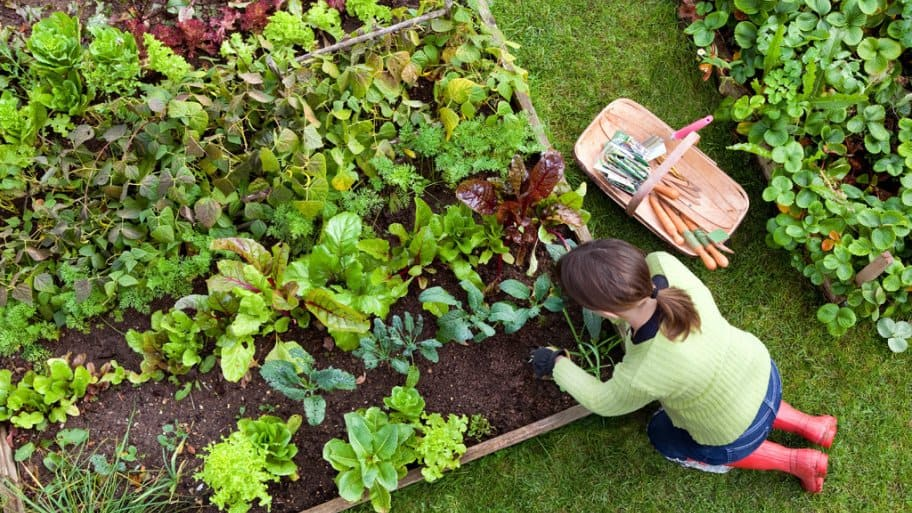 A Woman Working In A Raised Garden Bed Full Of Vegetable Plants