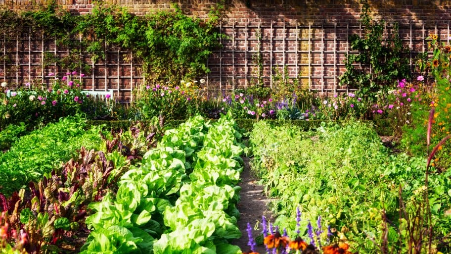 Create a beautiful edible garden for fresh fruits and vegetables. (Photo courtesy of Getty Images/iStock Photos)