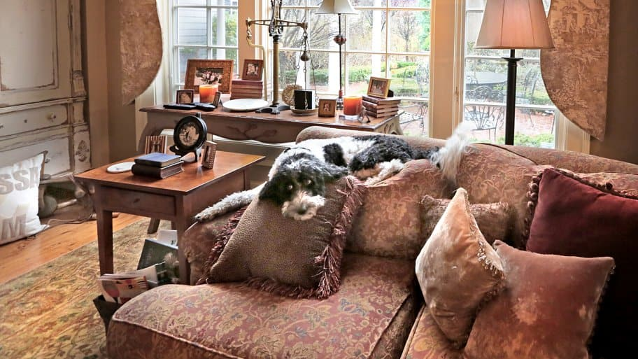 formal living room with dog on couch