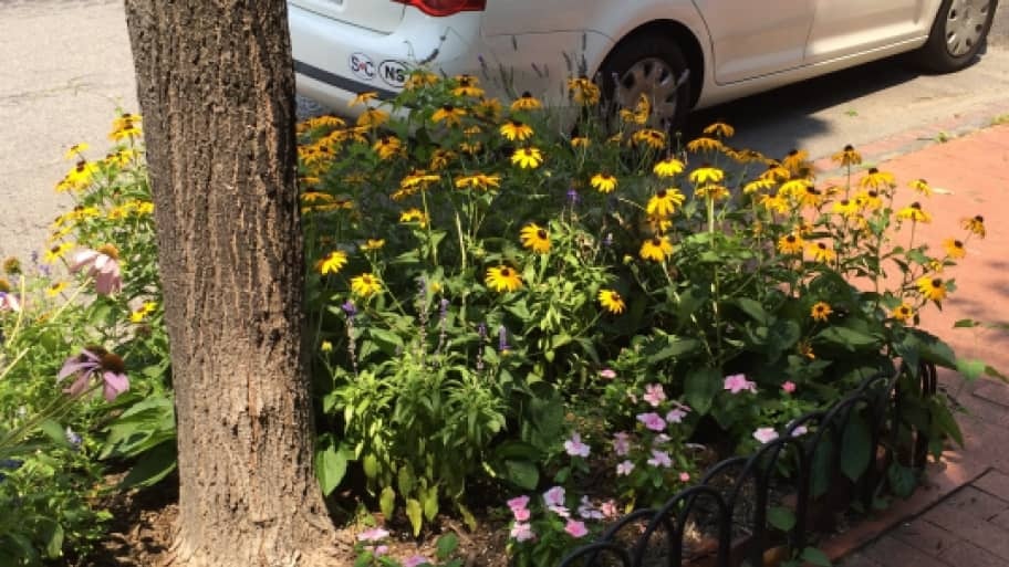 DC tree box flowers (Photo by Jason Hargraves)