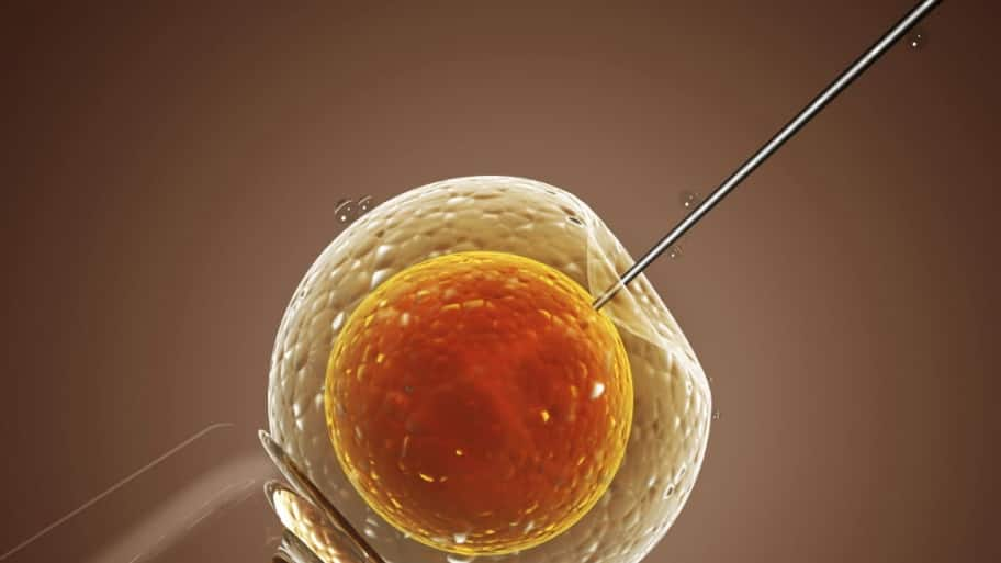 An embryo getting injected with semen.