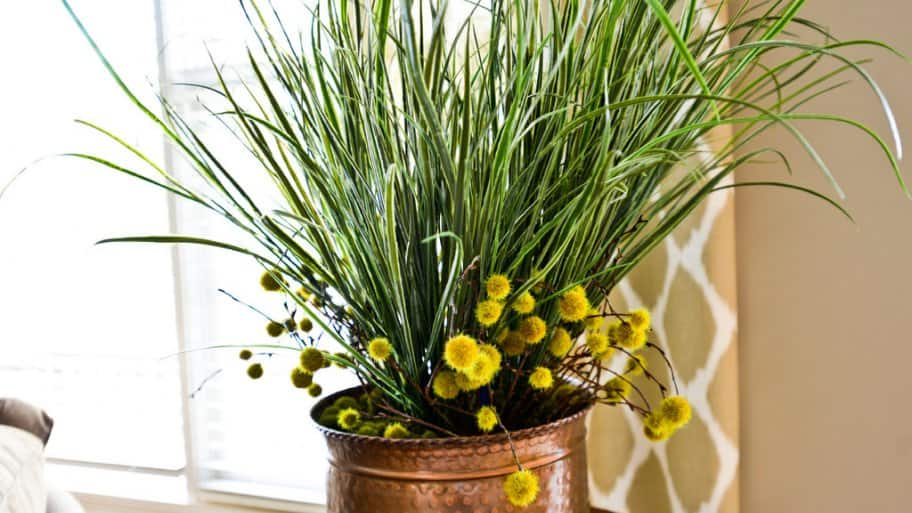 green-leafed indoor ornamental plant