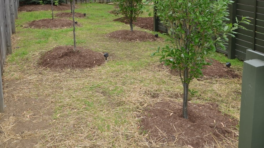 newly planted trees (Photo by Photo by Roger Tunis )