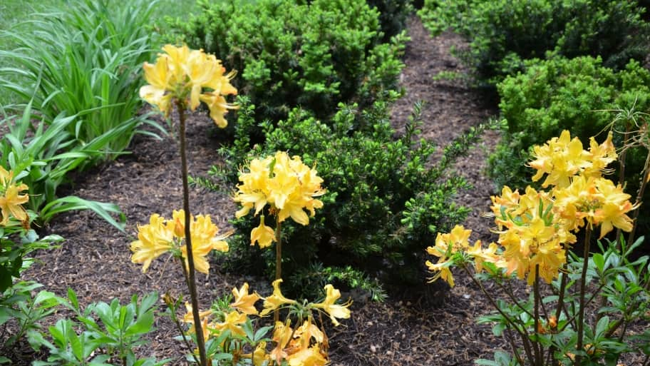 Flowers In Mulched Garden Bed