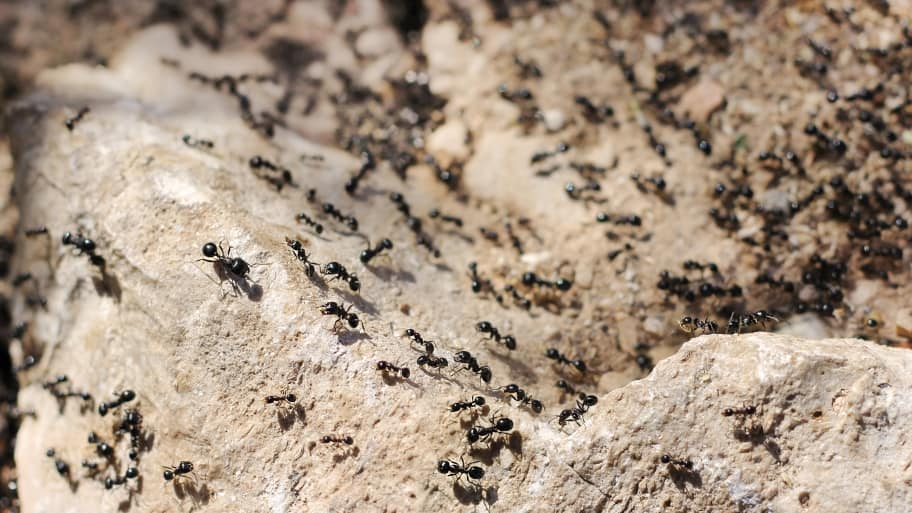 Ants can get into your house through very small openings. Inspect all windows and doors around your home for potential points of entry. (Photo courtesy of Greenix Pest Control)
