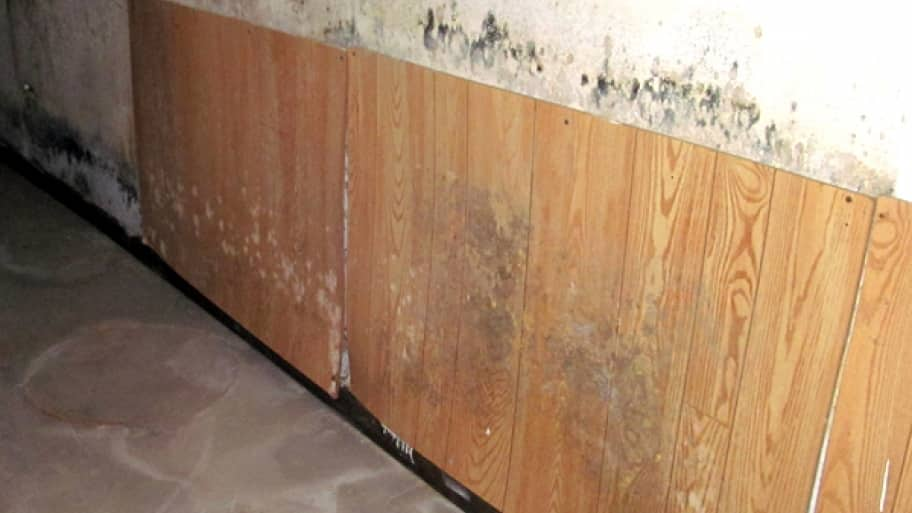 How to Eliminate Basement Mold & How to Eliminate Basement Mold | Angieu0027s List