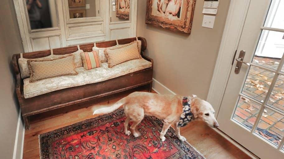 dog in a mudroom