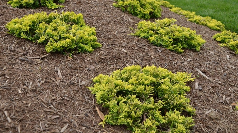 How Much Does Mulch Delivery And Install Cost Angie S List
