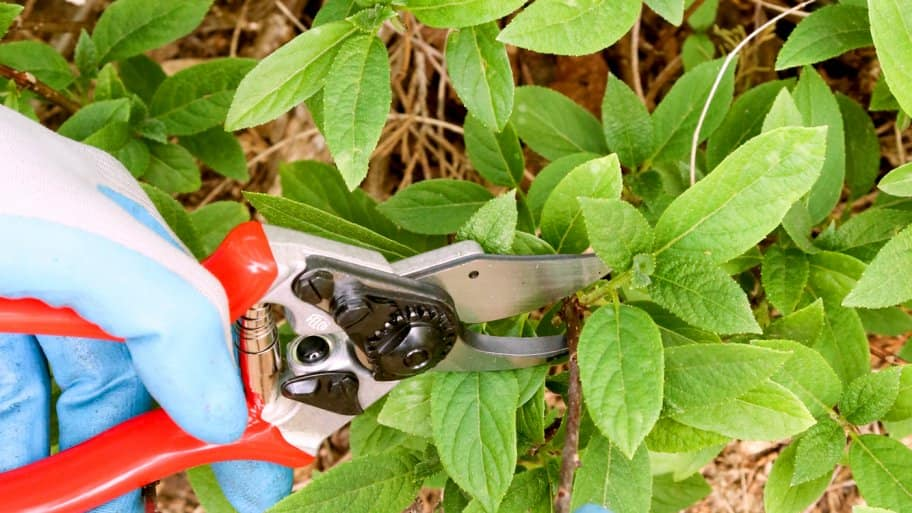 Proper pruning can revitalize plants and add instant beauty to wilted landscaping. (Photo courtesy of Melissa Caughey/Tilly's Nest)