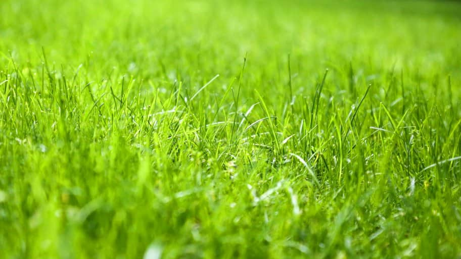 Backyard Transformation Lawn Care Tips Angie S List