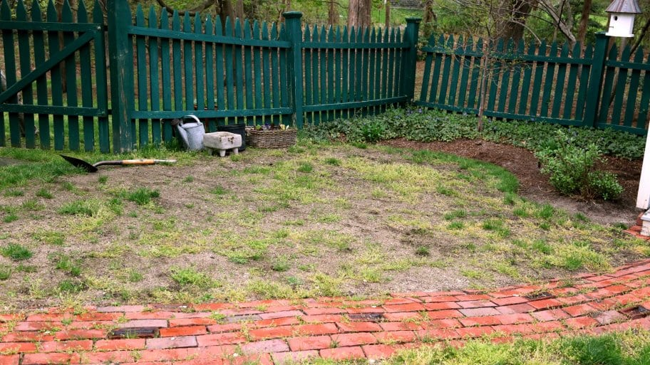 Reseeding And Repairing A Lawn Angie S List
