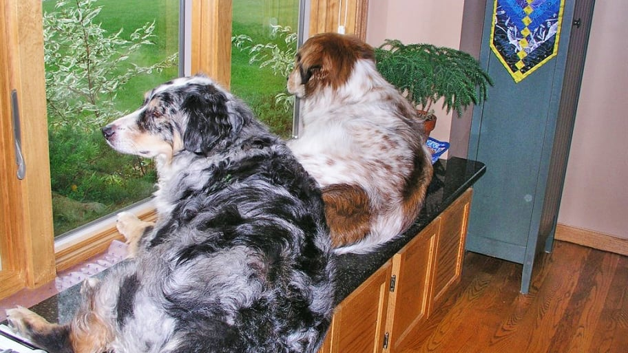 dogs lying on bench looking out of window