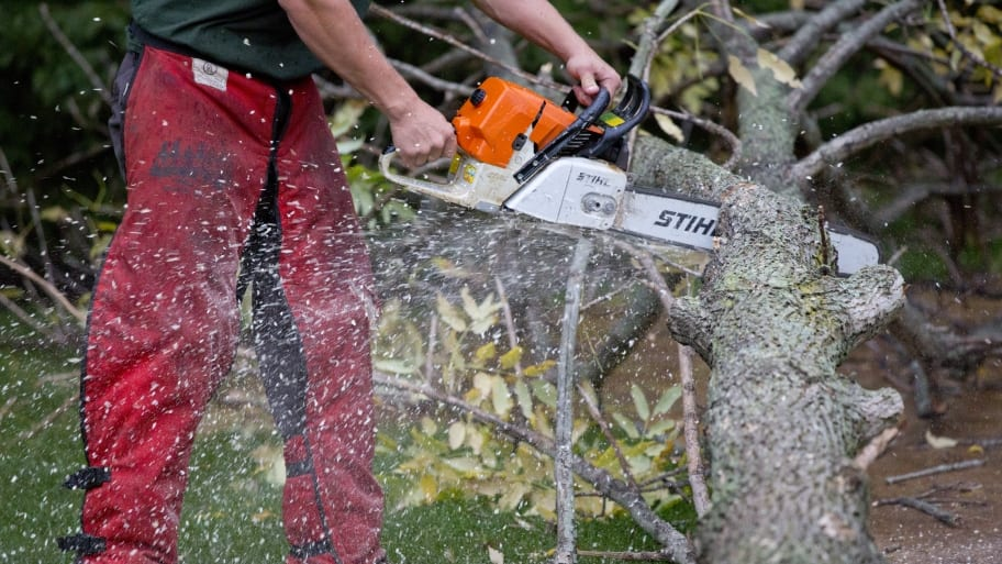 4 Tools Used for Tree Removal | Angie's List