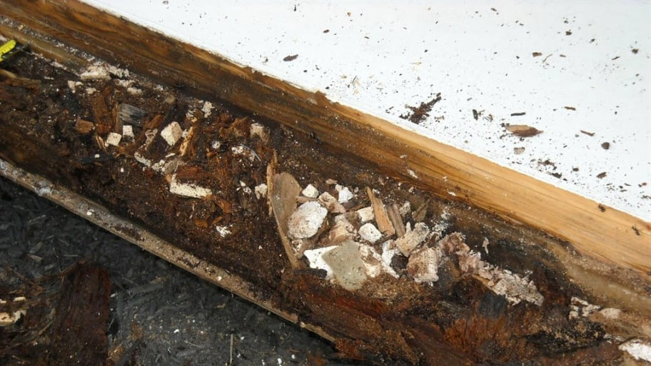 Termites can cause significant damage to homes if they're not spotted right away.