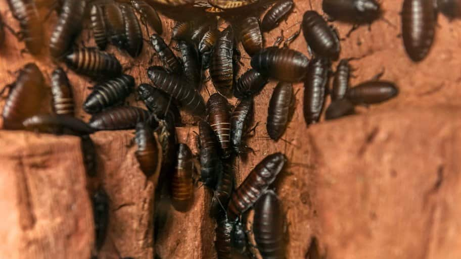 How To Get Rid Of Roaches Naturally Angie S List