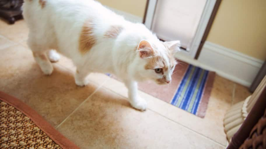 A white cat with brown spots walking on a floor