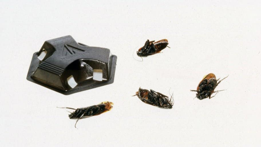 What\'s the Best Cockroach Killer? | Angie\'s List