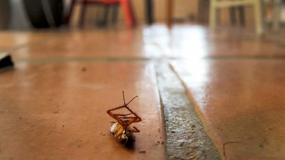 Dead cockroach & How Much Does Cockroach Extermination Cost?   Angieu0027s List