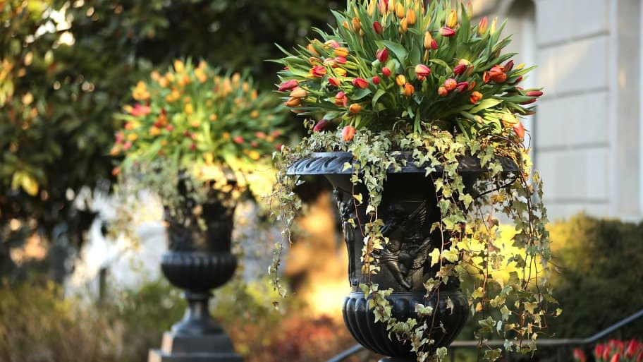 potted plants on a front entrance