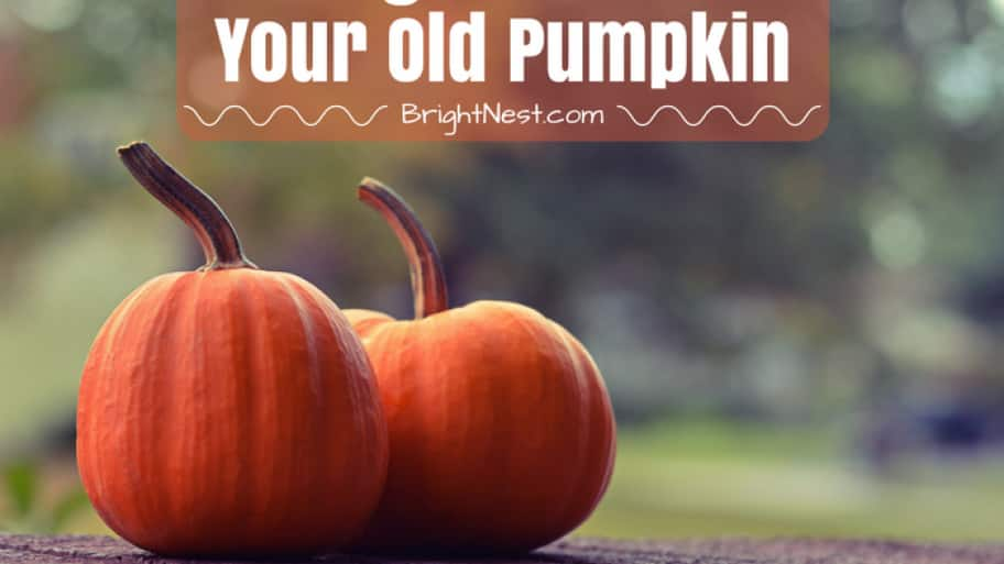 7 Things To Do With Your Old Pumpkin Angie S List