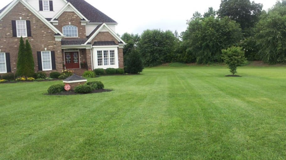 Image result for Why begin A home lawn?