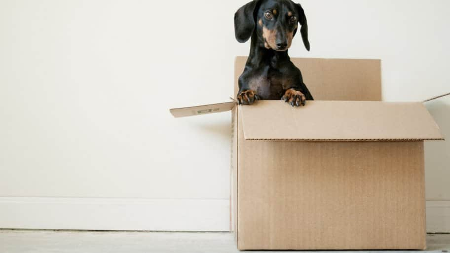 dog friendly moving