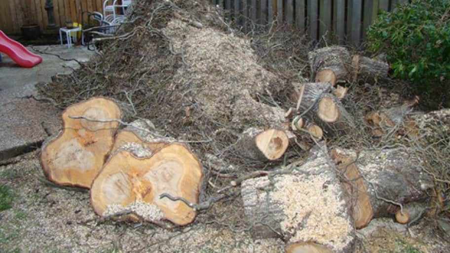Yard Waste Removal: Recycling, Donating and Reusing