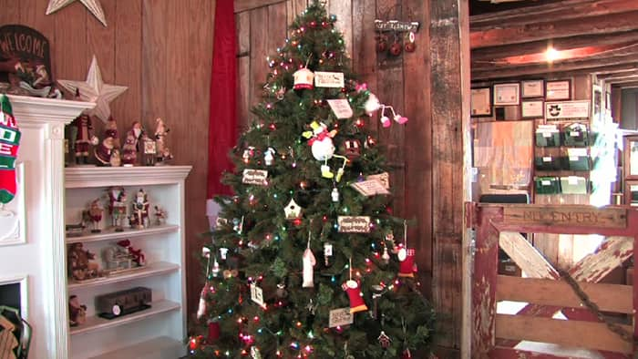 video tips for picking the right christmas tree