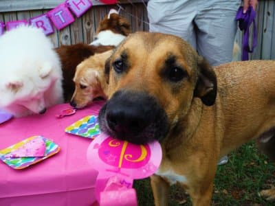 Top 8 best richmond va dog groomers angies list how to throw a dog birthday party solutioingenieria Gallery
