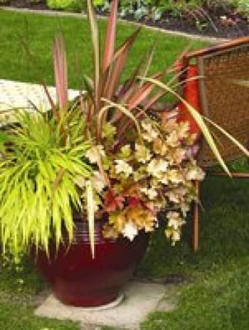 Choosing plants for seasonal containers angie 39 s list for Choosing plants for landscaping