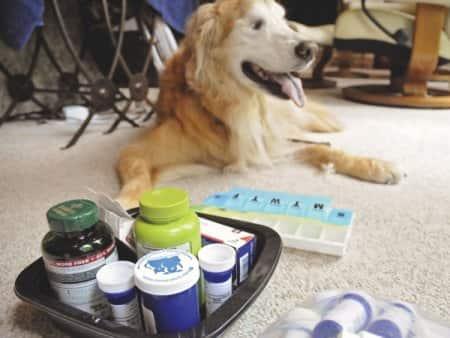 sick senior dog in hospice care