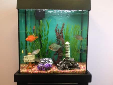 How to pick the best pet for your lifestyle angie 39 s list for Best tank cleaning fish