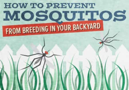 Follow the nine tips on this infographic to prevent mosquitoes from  breeding on your property - How To Keep Mosquitoes Out Of Your Yard Angie's List