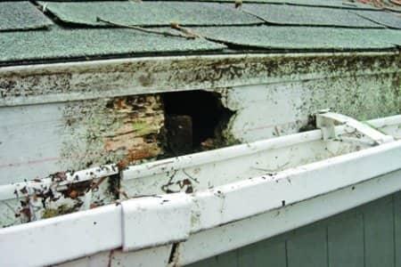 Fascia damage on roof