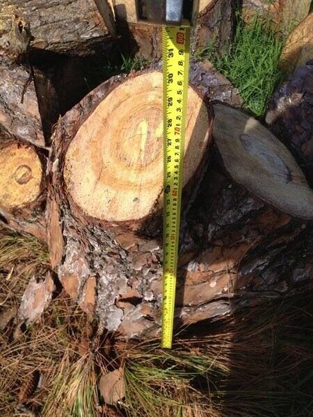 Patrica Milian says Mike's Tree Service won't cut the tree stumps smaller so the garbage collection service will dispose of them. (Photo courtesy of Angie's List member Patricia Milian of Lake Worth, Fla.)