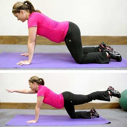 pregnancy exercises - bird dog