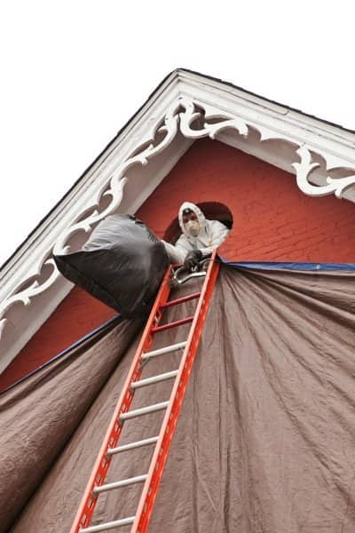 An Animal Management Systems technician removes insulation and other waste from a Plainfield, Ind., home where bats lived. (Photo by Brandon Smith)